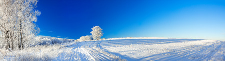 beautiful rural winter landscape a panorama with the blue sky, a field and the forest