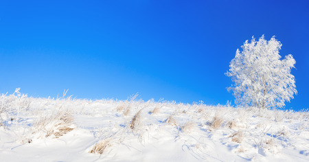 beautiful rural winter landscape a panorama with the blue sky, a field and the one  tree photo
