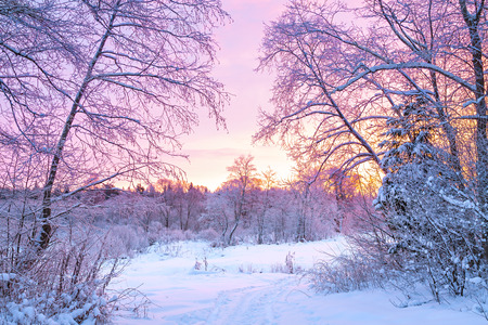 beautiful winter night landscape with sunset in the forest