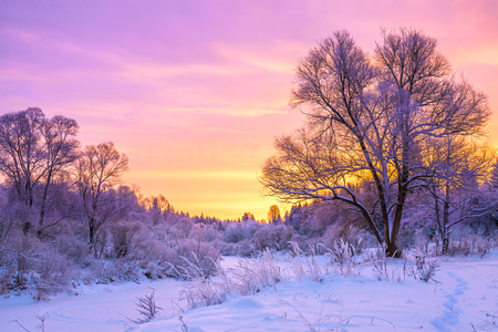 夕日や森林と美しい冬の風景
