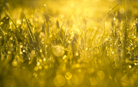 the yellow blur background from a grass on a field photo