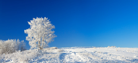 beautiful  winter landscape a panorama with the blue sky, a field and the one  tree photo
