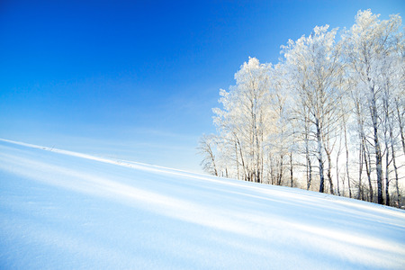 beautiful  winter landscape a with the blue sky, a field and the forest