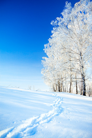 beautiful  winter landscape a with the blue sky, a  footpath  and the forest photo