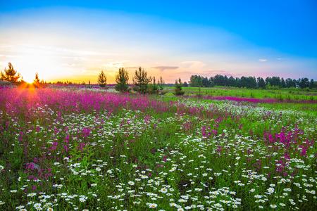 de zomer landschap met bloemen op een weide en zonsondergang Stockfoto