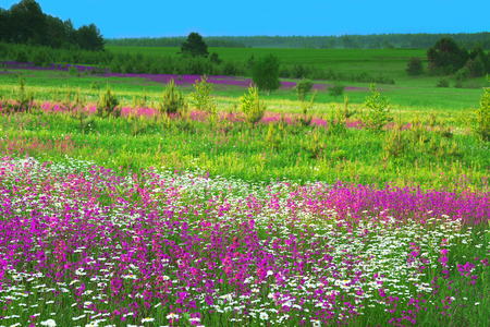 the summer  landscape with  flowers on a meadow and  sunset photo