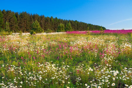 the spring landscape with flowers on a meadow and sunset