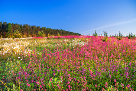 the spring  landscape with  flowers on a meadow photo