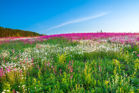 the spring  landscape with  flowers on a meadow Foto de archivo