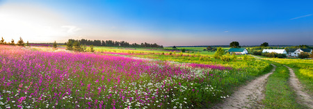 summer rural landscape panorama with a blossoming meadow, the road and a farm Stockfoto