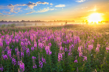 beautiful rural landscape with the sunrise  and  blossoming meadow 스톡 콘텐츠