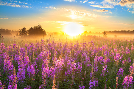 rural landscape with the sunrise  and  blossoming meadow photo
