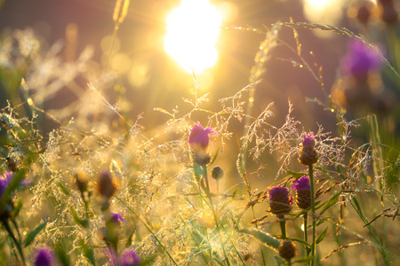 the blurred  sunrise on a summer meadow photo