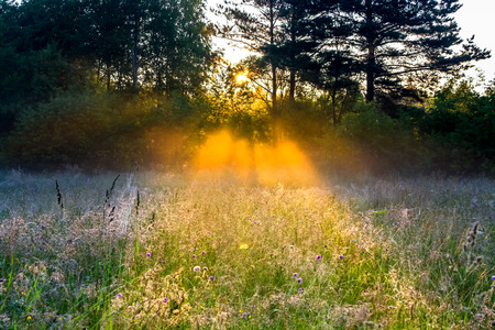 beautiful rural landscape with the sun beams  on a meadow photo
