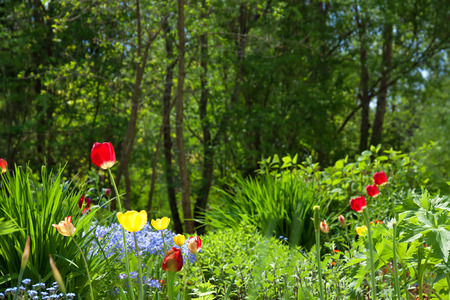 landscape rural: bed in a garden with beautiful flowers,soft focus