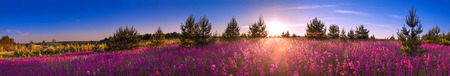 beautiful summer landscape with the blossoming meadow, sunrise