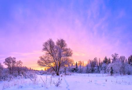 morado: Panorama del paisaje de invierno con la puesta del sol y el bosque y la nieve Foto de archivo