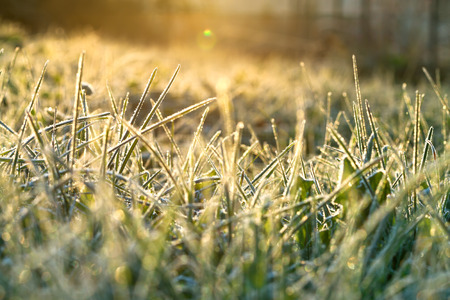 hoarfrost: abstract background from a grass covered with hoarfrost,soft focus. rime on grass blur background. scene autumn meadow and sun  shines. rural landscape with sunrise