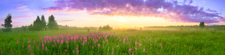 rural summer landscape with sunrise, a blossoming meadow and fog. panorama