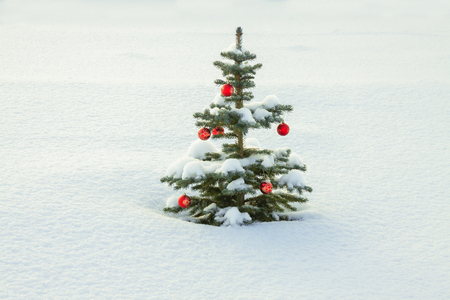 winter landscape with Christmas fir tree decoration red ball and snow. holiday new year