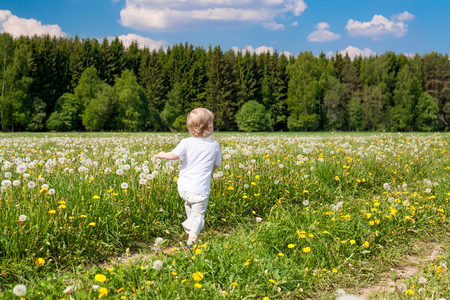 small child  boy plays on a summer meadow. little kid  in spring park, leisure activity Stock Photo
