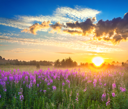 beautiful rural panorama landscape with sunrise  and  blossoming meadow. purple flowers flowering on field. wildflowers blooming on sunset. panoramic view