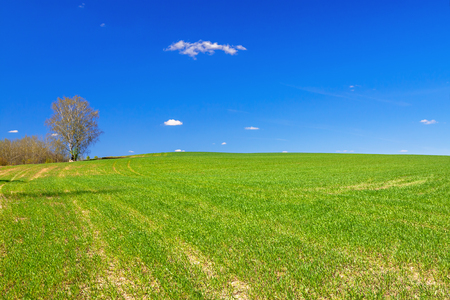 beautiful spring rural landscape with field and blue sky. agricultural field  view.  Stock Photo