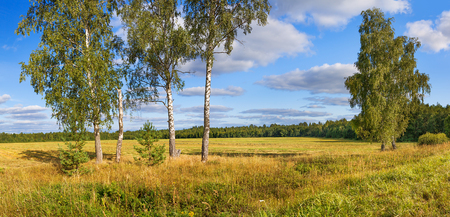 autumn rural landscape panorama, field, forest, blue sky and white clouds. autumn day harvest. linen fibre, on a field with flax