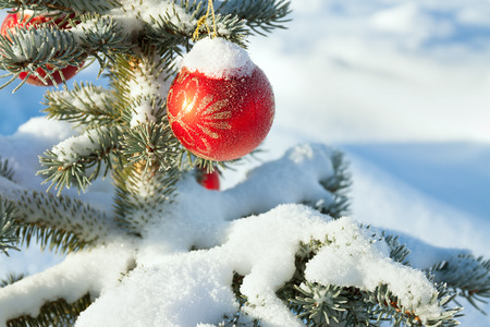 winter landscape with Christmas fir tree decoration red ball and snow. holiday new year. close up branch Christmas fir tree decorated red ball