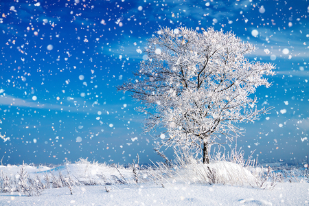 beautiful winter rural landscape with one tree and blue sky. wintry frosty sunny day. snowy winterly landscape. Stock Photo