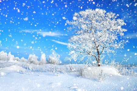 beautiful winter rural landscape with forest and blue sky. wintry frosty sunny day. snowy winterly landscape.