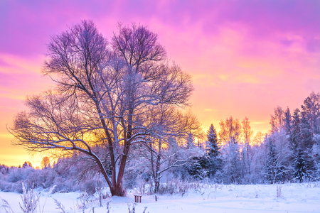 beautiful winter landscape with forest, trees and sunrise. winterly morning of a new day. purple winter landscape with sunset Stock Photo - 88901133