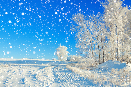 beautiful rural winter landscape a with the blue sky, a field and the forest Stock Photo