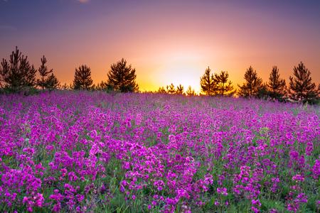 Spring wild flowers on a field summer rural landscape with purple spring wild flowers on a field summer rural landscape with purple flowers on a meadow mightylinksfo