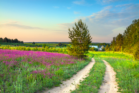 summer rural landscape with a blossoming meadow, road and a farm. spring wild flowers on a field.  purple flowers on a meadow and  sunset.  flowering field wildflowers and farmhouse on sunrise. Stock Photo