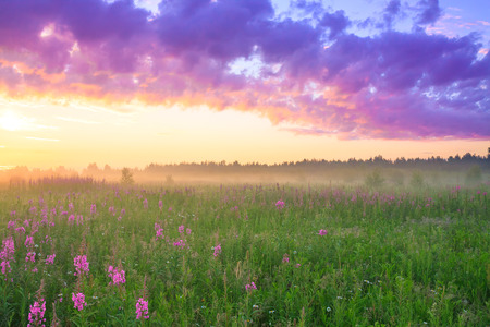 beautiful rural landscape with sunrise  and  blossoming meadow. purple flowers flowering on spring field. wild flowers blooming on sunset. summer view Stock Photo
