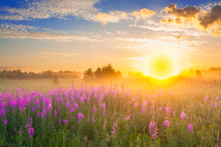 beautiful rural landscape with sunrise  and  blossoming meadow. purple flowers flowering on spring field. wild flowers blooming on sunset. summer scene view Stock Photo