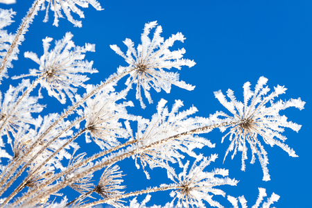 abstract flowers in frost on blue sky background. branches of dry plants are covered with snow in winter. 스톡 콘텐츠