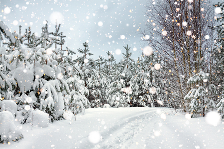 gloomy grey landscape with winter forest and trees covered with snow. winter scenery snowy with pine 版權商用圖片 - 117765114