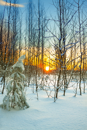 beautiful winter landscape with forest and sunset. scene view with winterly scenery 版權商用圖片