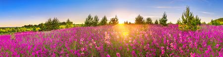 Hermoso panorama de paisaje primaveral con flores en flor en la pradera y el amanecer. Vista panorámica de un campo floreciente con flores silvestres de color púrpura