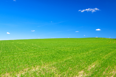 beautiful spring rural landscape with field and blue sky. agricultural field.
