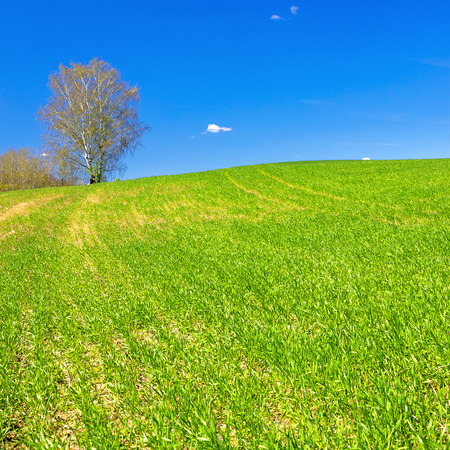 beautiful spring rural landscape with field and blue sky. agricultural field. 版權商用圖片 - 120959716