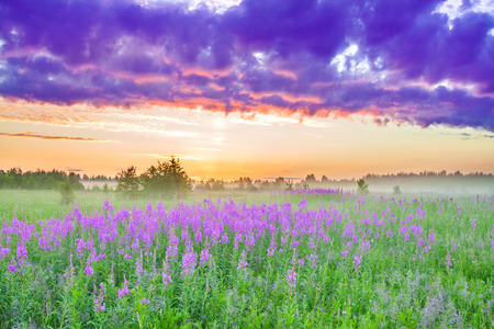 beautiful rural landscape with sunrise  and  blossoming meadow. purple flowers flowering on spring field. wildflowers blooming on sunset. summer view