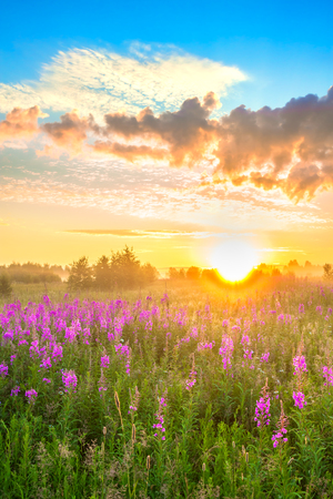 beautiful rural landscape with sunrise  and  blossoming meadow. purple flowers flowering on spring field  . wildflowers blooming on sunset. summer view