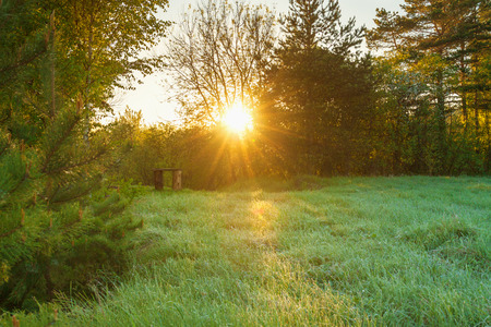 beautiful spring forest landscape with a meadow. sunrise sun shines through trees. Stock Photo