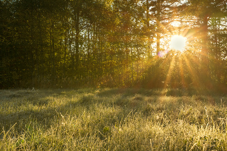 beautiful landscape with sun and forest and meadow at sunrise. sun rays shine through trees. spring view Stock Photo