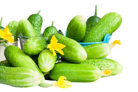 green fresh cucumbers isolated on white background
