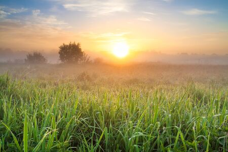 beautiful summer landscape with sunrise and meadow. panoramic view of spring field and sunset 版權商用圖片