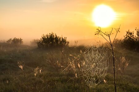 beautiful summer landscape with sunrise and fog. spider web on meadow